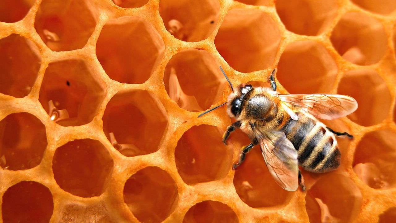 Пчелиный воск – идеальное средство для глубокой очистки пор