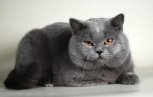 Как кошки чувствуют своих хозяев
