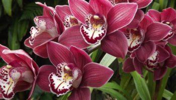 Распространенные 8 способов уничтожить любимую орхидею