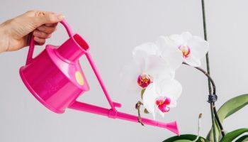 Основные 7 секретов, которые помогут выбрать идеальную орхидею