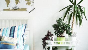 Безопасные комнатные растения для детской комнаты: 7 видов