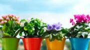 Рейтинг лучших минеральных удобрений для комнатных растений