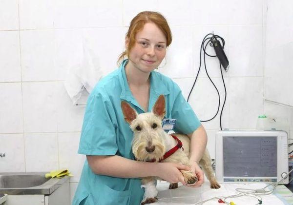 Российский день ветеринара