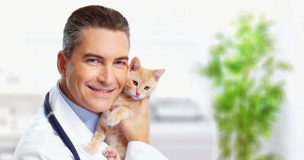 ветеринар с котом